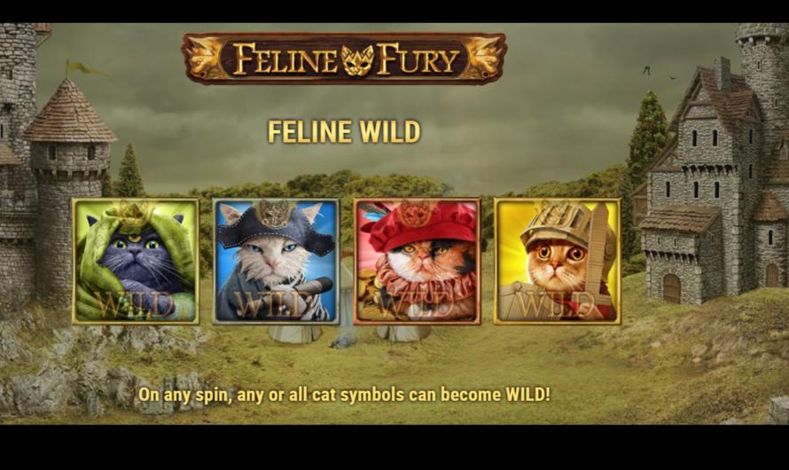 Feline Fury from Play'n GO